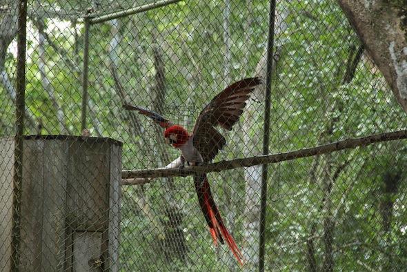 15-06-20-guatemala-scarletmacaw
