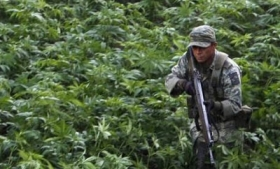 Legal marijuana may yet affect crime in Uruguay