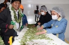 President Evo Morales at a coca factory