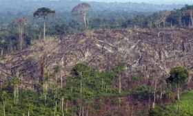 Deforestation in Brazil's Amazon