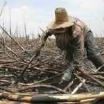 Slave labor is an entrenched practice in Brazil