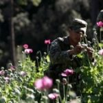 A Mexican soldier in a poppy field