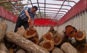 Cocobolo wood seized in Panama