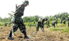 Soldiers eradicating coca in the Chapare region