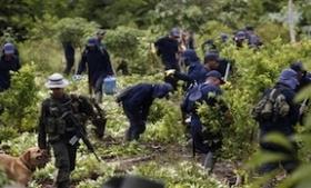 Coca fields in Colombia