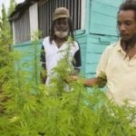 Jamaica's cabinet has approved changes to drug laws