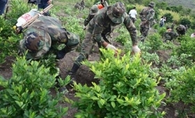 Coca production in Bolivia is down 9%