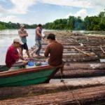 Wood brought down the Javari -