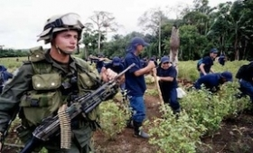 A soldier guards workers eradicating coca plants
