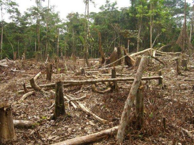 Drones could help prevent rampant deforestation.