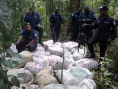Marijuana seized in Trinidad