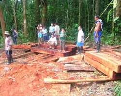 Illegal logging in Peru is facilitated by poor controls
