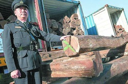 The rosewood seized in Hong Kong