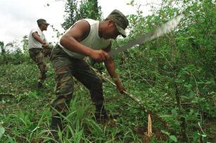 Bolivian soldiers eradicate coca