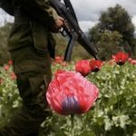 A soldier advances through a poppy field