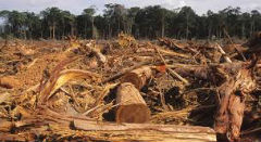 Around 80% of logging in Brazil is illegal