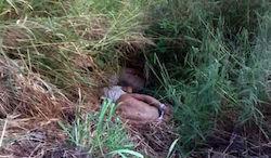 The Colombians' bodies were found in Veracruz