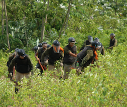 Peruvian authorities carrying out a coca eradication operation