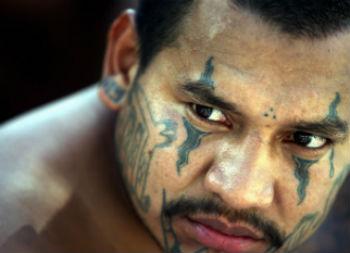 An MS13 gang member