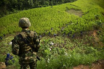 Coca eradication in Colombia