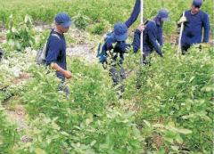 Coca eradicators in Colombia