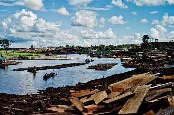 Timber trafficking in Peru