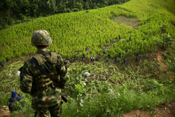 A Colombian solder oversees coca eradication