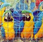 Exotic birds are among the most trafficked animals
