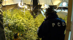 Hydroponic marijuana laboratory in Costa Rica