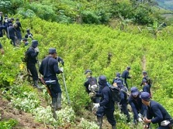 Peruvian soldiers destroying coca crops in the VRAEM region.