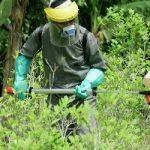 Anti-narcotics police in a coca field