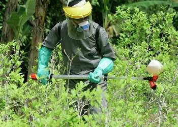 Anti-narcotics police in a coca field