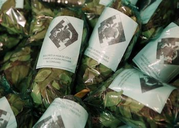 Bolivian coca packaged for legal consumption