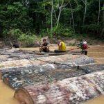 Loggers move tree trunks down the Putaya River in Peru