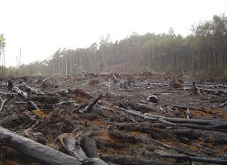 Deforestation poses a serious risk in Colombia
