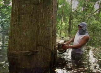 Un maderero ilegal en Perú