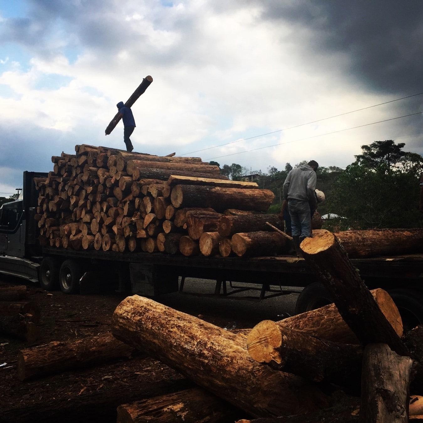lLocales montan la madera a un camión de carga. Fotografía: Steven Dudley