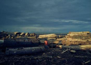 La tala ilegal produce deforestación sustancial en el Amazonas