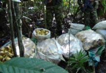 El ejército de Colombia incautó 563 minas antipersonales en el departamento de Chocó