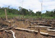 Con los guardaparques abandonando sus puestos, es probable que la deforestación corra desenfrenada en la selva tropical de Colombia