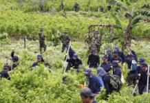 La policía supervisa a campesinos contratados para destruir la coca en San Miguel, Putumayo